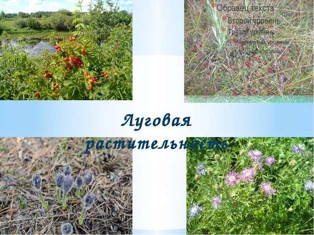 Луговая растительность