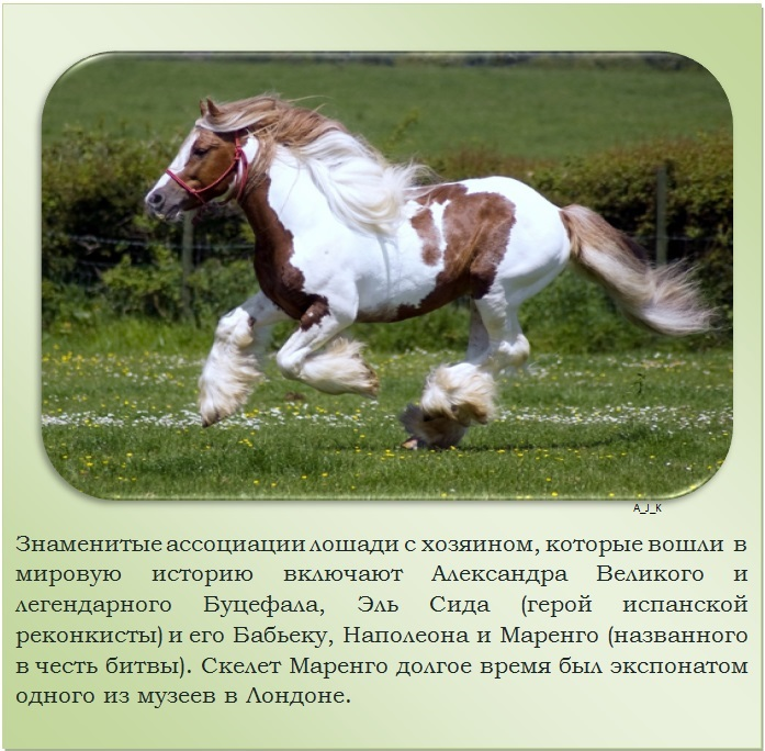 C:\Documents and Settings\Дом\Рабочий стол\Новая папка\1364759515_4.jpg
