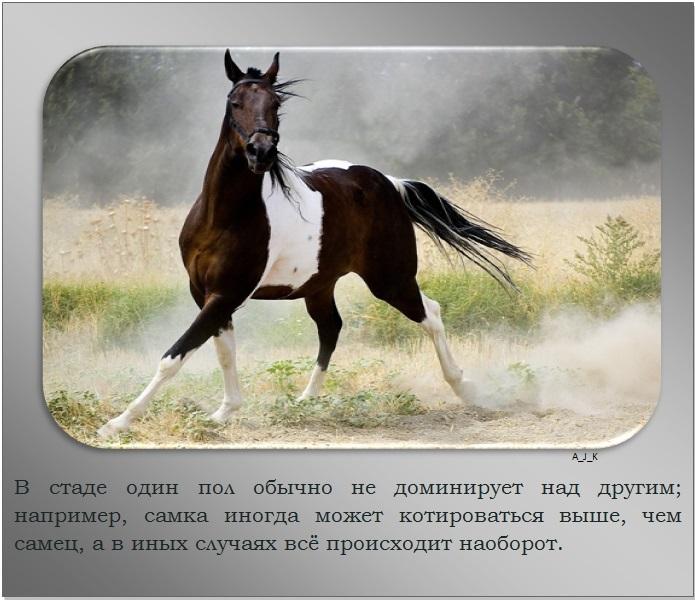 C:\Documents and Settings\Дом\Рабочий стол\Новая папка\1364759601_21.jpg