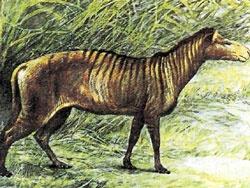 Гиппорион, предок лошади