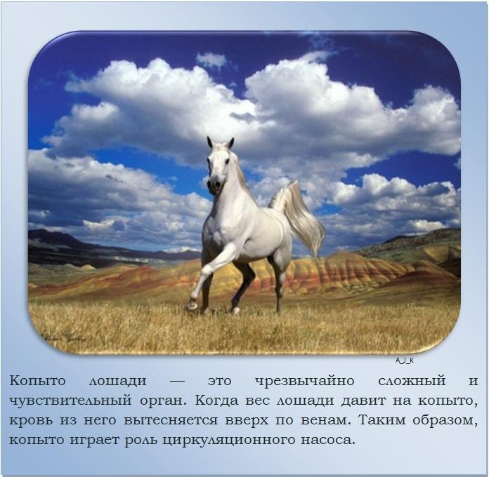 C:\Documents and Settings\Дом\Рабочий стол\Новая папка\1364759601_20.jpg