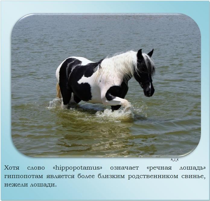 C:\Documents and Settings\Дом\Рабочий стол\Новая папка\1364759601_23.jpg