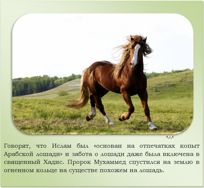 C:\Documents and Settings\Дом\Рабочий стол\Новая папка\1364759515_11.jpg