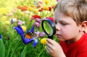 Инновации в экологическом воспитании у дошкольников