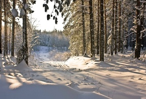 природа, Зима, winter, снег, лес