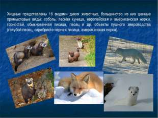 Хищные представлены 16 видами диких животных, большинство из них ценные промы