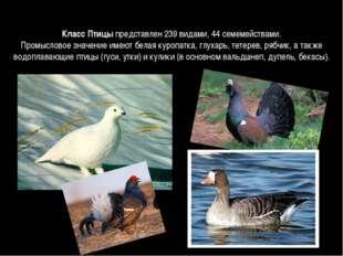 Класс Птицыпредставлен 239 видами, 44 семемействами. Промысловое значение им