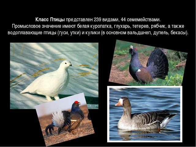 Класс Птицыпредставлен 239 видами, 44 семемействами. Промысловое значение им...