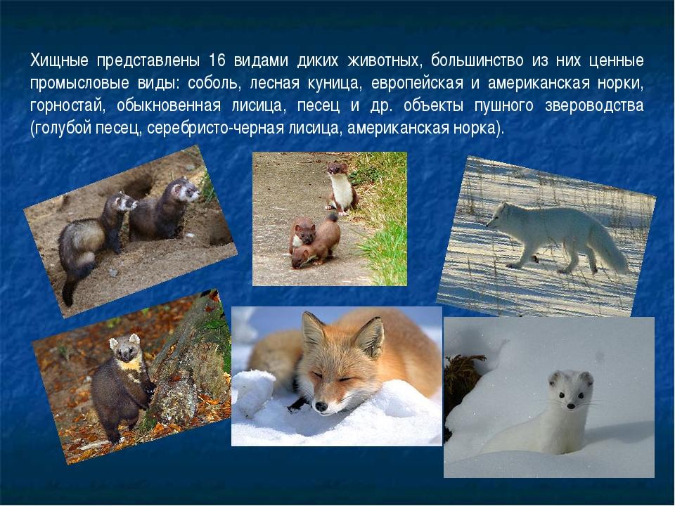 Хищные представлены 16 видами диких животных, большинство из них ценные промы...