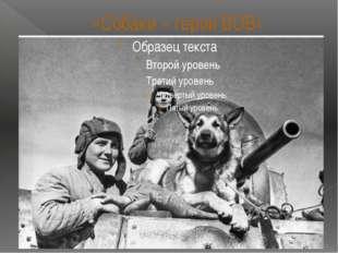 «Собаки – герои ВОВ»