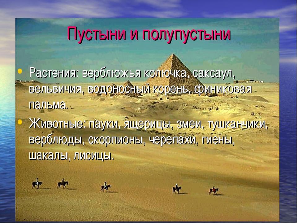 Пустыни и полупустыни Растения: верблюжья колючка, саксаул, вельвичия, водоно...