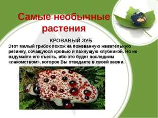 Самые необычные растения КРОВАВЫЙ ЗУБ Этот милый грибок похож на пожеванную ж