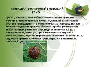 КЕДРОВО - ЯБЛОЧНЫЙ ГНИЮЩИЙ ГРИБ Про эту мерзость хоть сейчас можно снимать ф