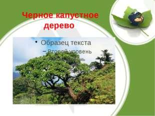 Черное капустное дерево