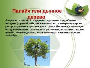 Папайя или дынное дерево Второе по известности дерево с крупными съедобными