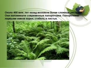 Около 400 млн. лет назад возникли более сложные растения. Они напоминали сов