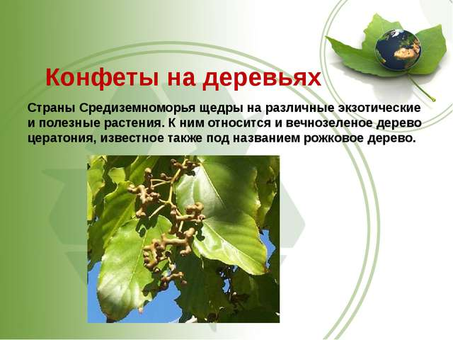 Конфеты на деревьях Страны Средиземноморья щедры на различные экзотические и...