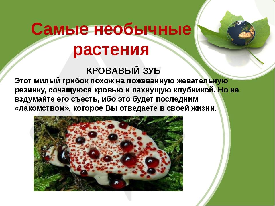 Самые необычные растения КРОВАВЫЙ ЗУБ Этот милый грибок похож на пожеванную ж...