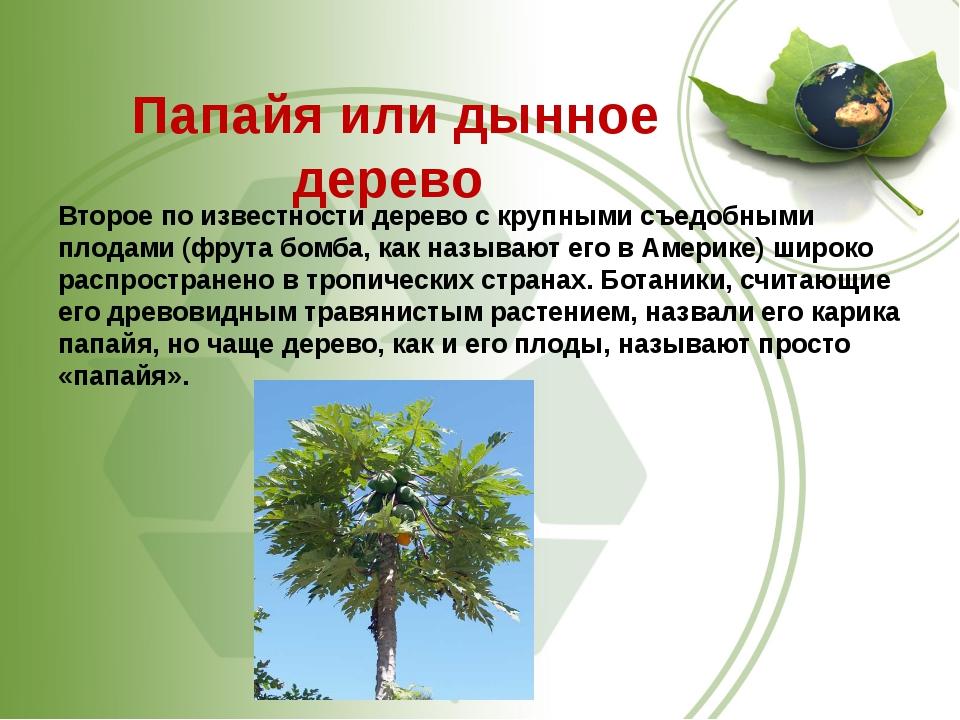 Папайя или дынное дерево Второе по известности дерево с крупными съедобными...