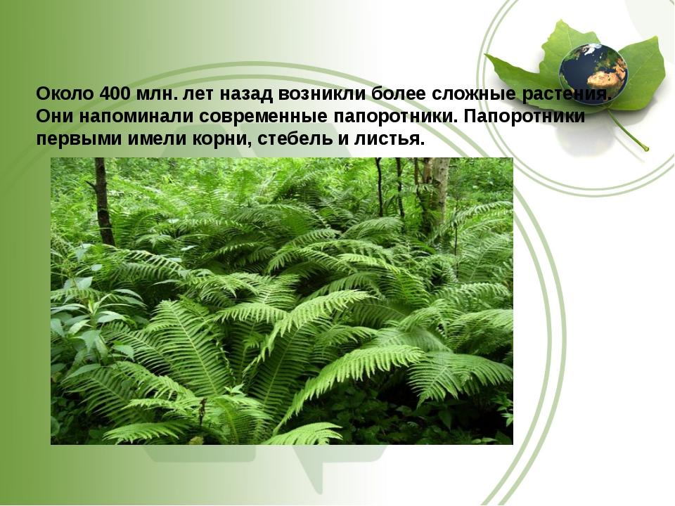 Около 400 млн. лет назад возникли более сложные растения. Они напоминали сов...