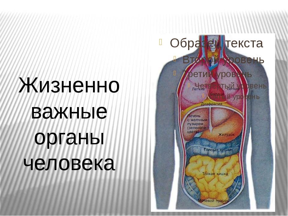Жизненно важные органы человека