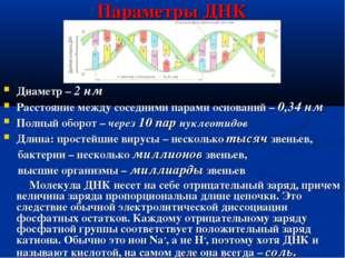 Параметры ДНК Диаметр – 2 нм Расстояние между соседними парами оснований – 0,