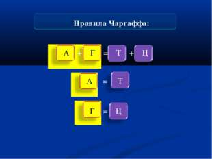 Правила Чаргаффа: А + Г = Т + Ц А = Т Г = Ц