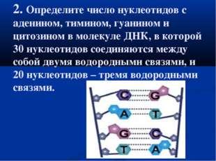 2. Определите число нуклеотидов с аденином, тимином, гуанином и цитозином в м