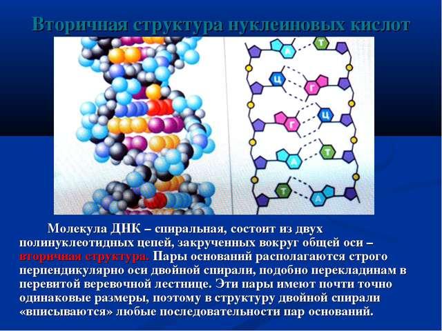 Вторичная структура нуклеиновых кислот Молекула ДНК – спиральная, состоит из...