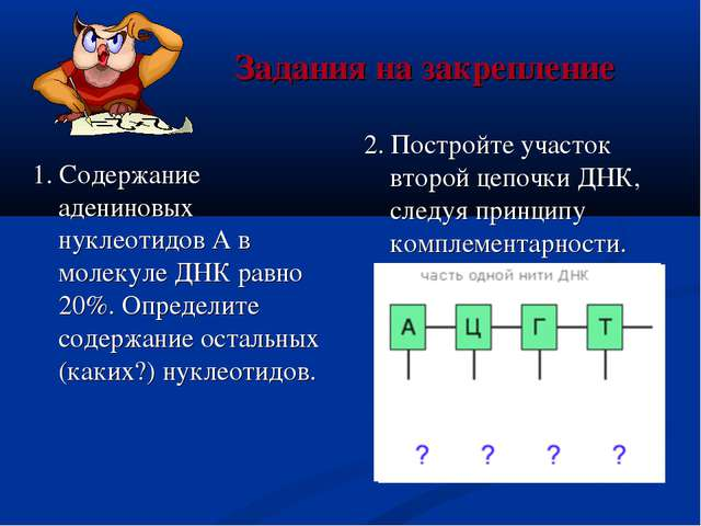 Задания на закрепление 1. Содержание адениновых нуклеотидов А в молекуле ДНК...