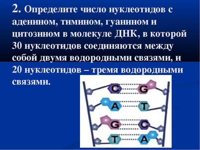 2. Определите число нуклеотидов с аденином, тимином, гуанином и цитозином в м...