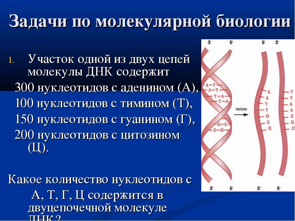 Задачи по молекулярной биологии Участок одной из двух цепей молекулы ДНК соде...