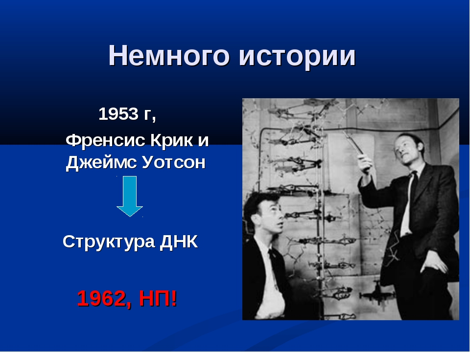 Немного истории 1953 г, Френсис Крик и Джеймс Уотсон Структура ДНК 1962, НП!