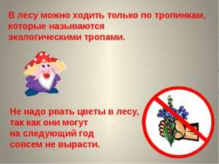 Не надо рвать цветы в лесу, так как они могут на следующий год совсем не выра