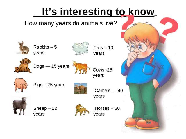 It's interesting to know. How many years do animals live? Rabbits – 5 years...
