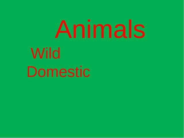 Animals Wild Domestic