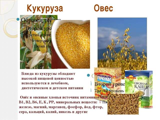 Кукуруза Овес Блюда из кукурузы обладают высокой пищевой ценностью используют...