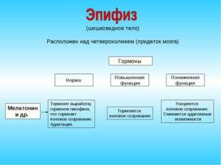 (шишковидное тело) Расположен над четверохолмием (придаток мозга) Гормоны Но