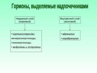 Наружный слой (корковый) Внутренний слой (мозговой) кортикостероиды: минерало