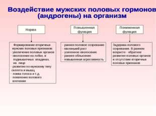 Норма Повышенная функция Пониженная функция Формирование вторичных мужских по