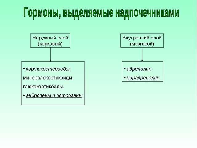 Наружный слой (корковый) Внутренний слой (мозговой) кортикостероиды: минерало...