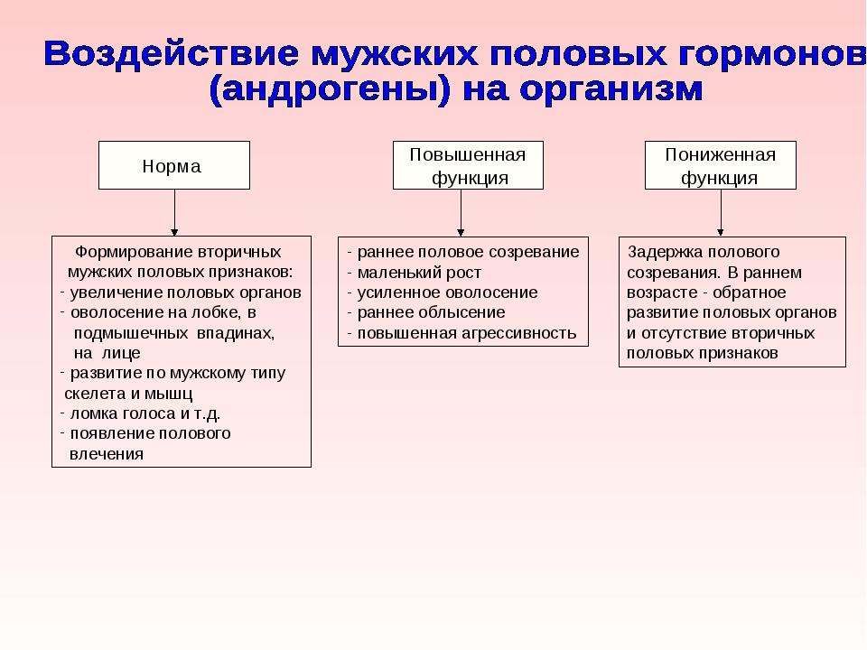 Норма Повышенная функция Пониженная функция Формирование вторичных мужских по...