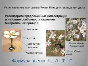 Лабораторная работа «Наблюдение митоза в клетках корешка лука»