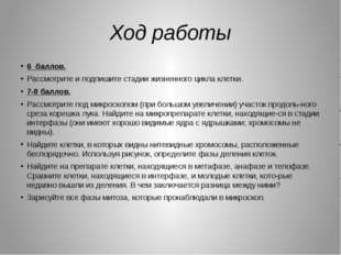 Я Д Р О ЯДРЫШКО ИНТЕРФАЗА 2n