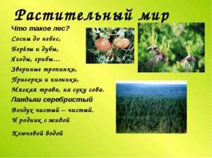 Растительный мир Что такое лес? Сосны до небес, Берёзы и дубы, Ягоды, грибы…