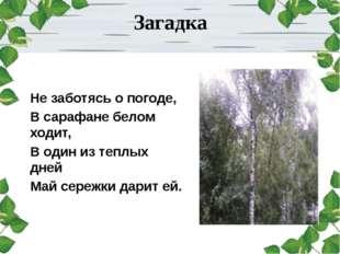 Загадка Не заботясь о погоде, В сарафане белом ходит, В один из теплых дней