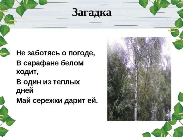Загадка Не заботясь о погоде, В сарафане белом ходит, В один из теплых дней...