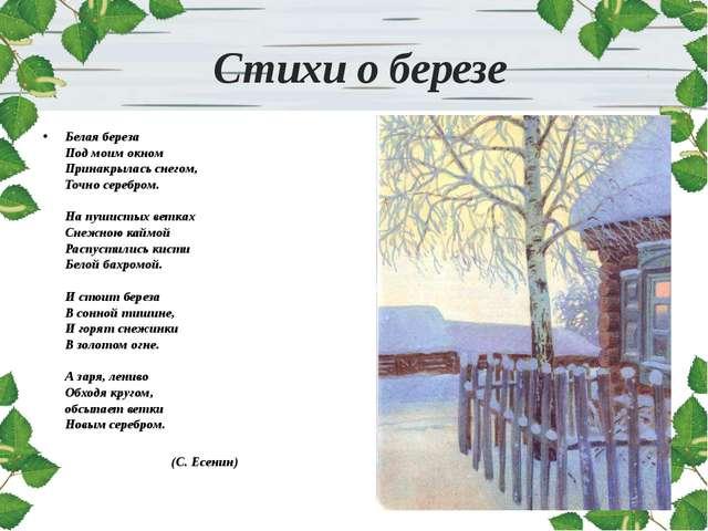 Стихи о березе Белая береза Под моим окном Принакрылась снегом, Точно серебр...