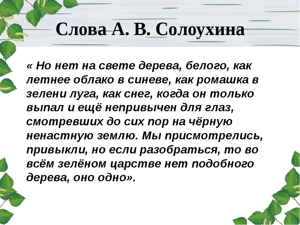 Слова А. В. Солоухина « Но нет на свете дерева, белого, как летнее облако в с...
