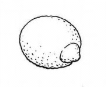 http://im3-tub-ru.yandex.net/i?id=6cedf892d153c5234819d912776b2845-108-144&n=33&h=150